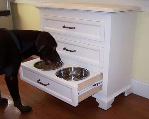 köpek beslenme köşesi