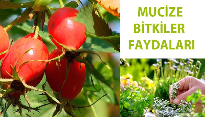 Mucize bitkiler ve faydaları